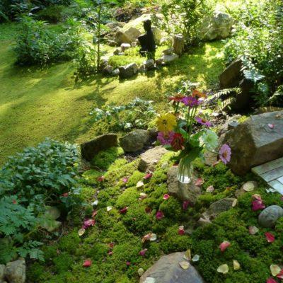 Moss Garden Summer