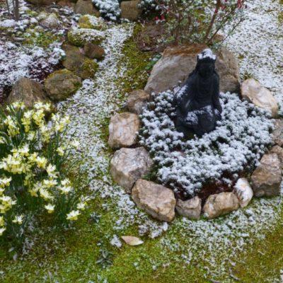 Kwan Yin Winter