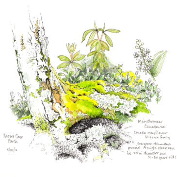 Drawing the Natural Gardens of North Carolina