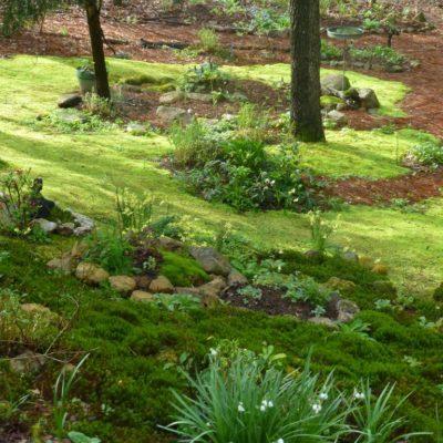 Moss Garden Spring