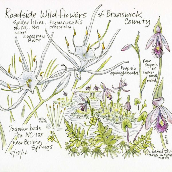 Roadside Wildflowers - Right