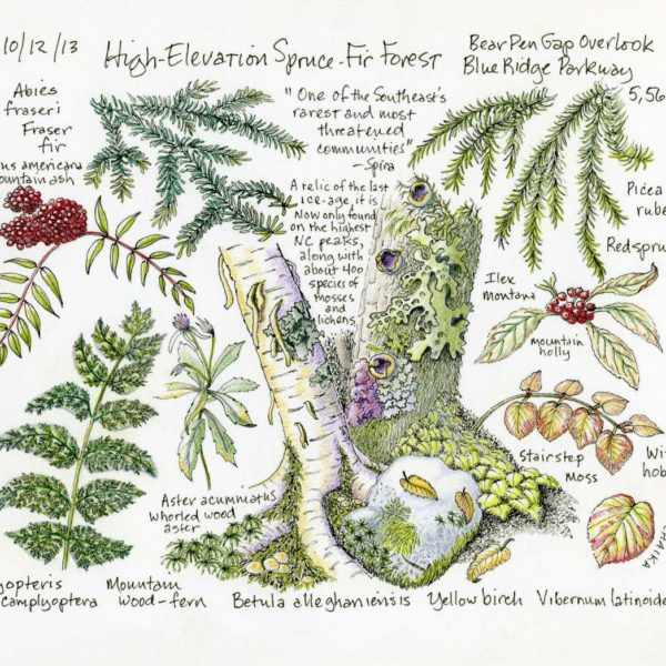 High Elevation Habitat - Spruce-Fir Forest - Right