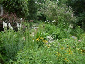 Flowers of pollinator garden