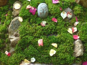 An offering to Mother Earth of rose petals on the green moss.