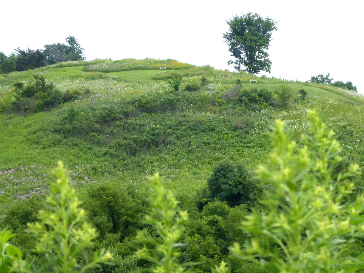 Shadewald Effigy Mounds covered with wildflowers.