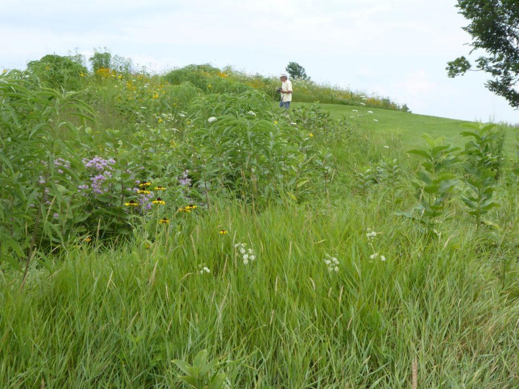 Man exploring amongs the wildflower covered effigy mound at Shadewald