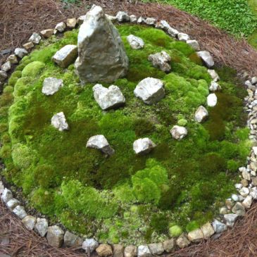 A Magical Stone, A Healing Chant