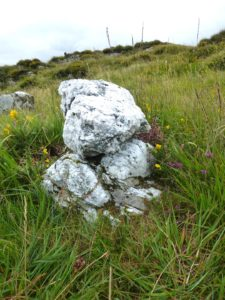 A white quartz boulder in grass with wildflowers on a hillside