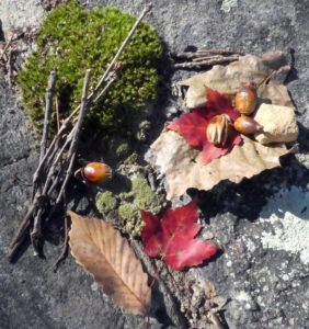 Collage of fall leaves, acorns, twigs, moss