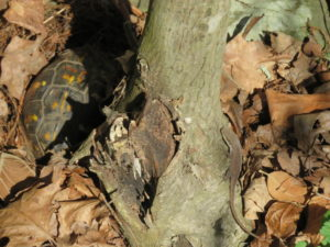 box turtle on left of tree, anole on the right in Turning a Trip Into a Pilgrimage