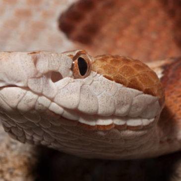 Snake Medicine: An Animal Healing